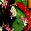 画像5: Riccardo Marzi リカルド マルツィ/Flower Vase/P(Peperoncino)/9 X 9 X H33 (5)